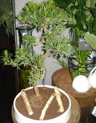 fleuriste designer lille racine carr e evenementiel. Black Bedroom Furniture Sets. Home Design Ideas
